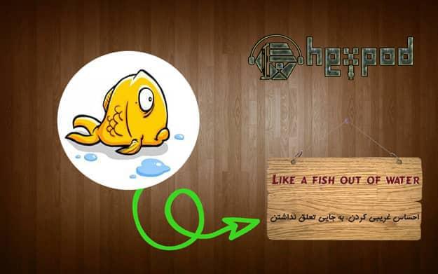 اصطلاح زبان انگلیسی - سطح مبتدی - Idioms - Like a fish out of water