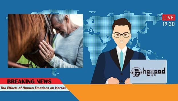 متن خبر انگلیسی - The Effects of Humen Emotions on Horses - English News