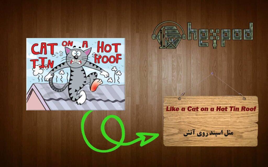 اصطلاح زبان انگلیسی - Idioms - Like a cat on a hot tin roof